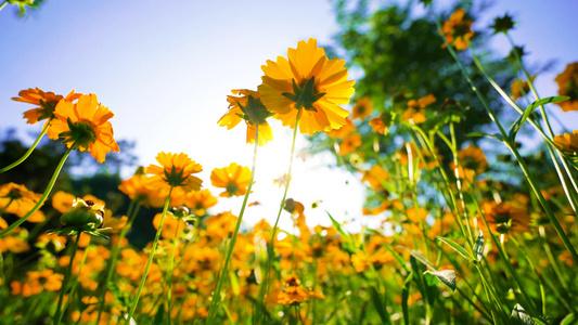4k盛放的花朵22秒video