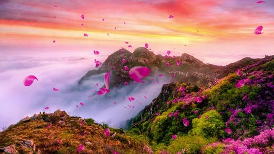 花开花落花瓣美景视频16秒视频