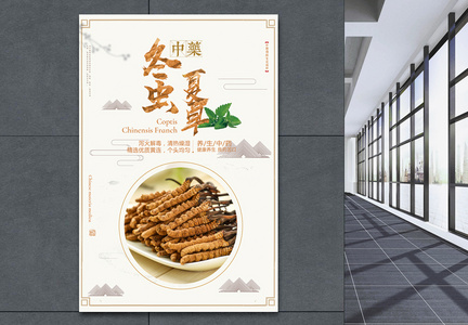冬虫夏草中药海报设计图片