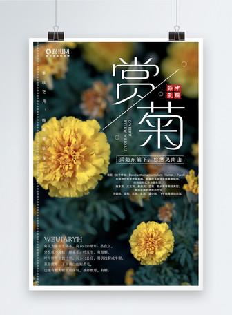 秋天赏菊海报