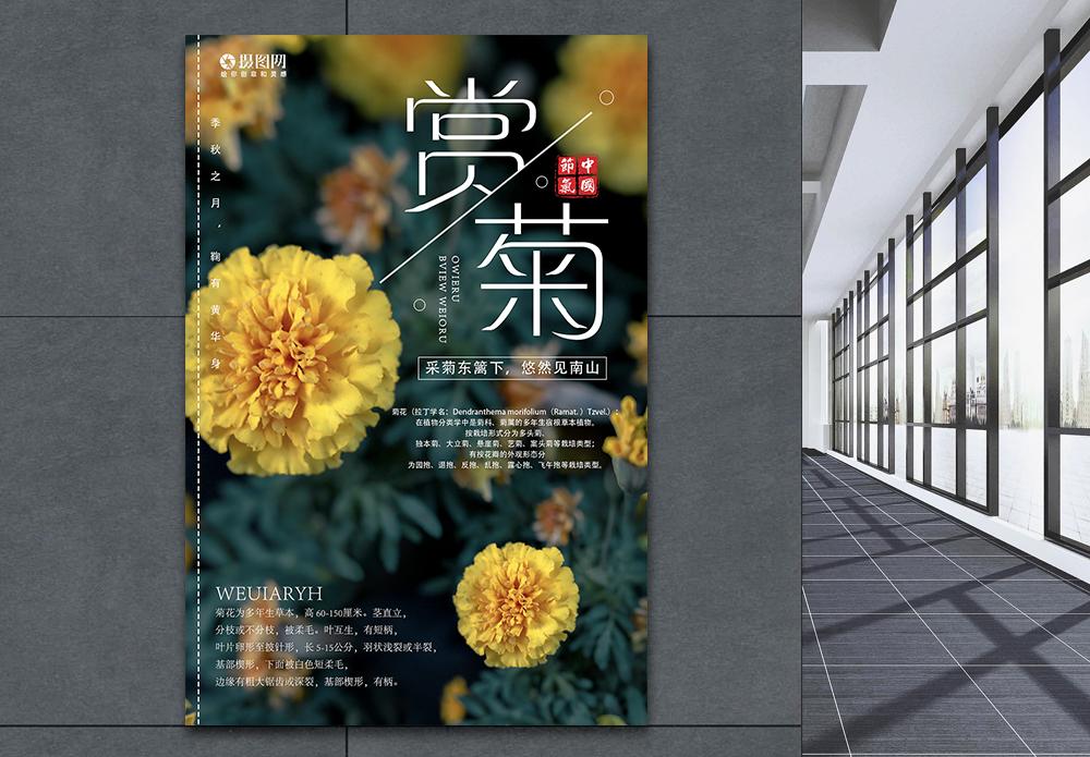 秋天赏菊海报图片