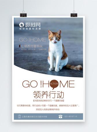 流浪动物收养海报