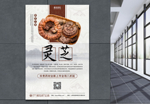 灵芝养生药材海报设计图片