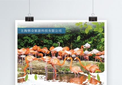 上海野生动物园旅游海报图片
