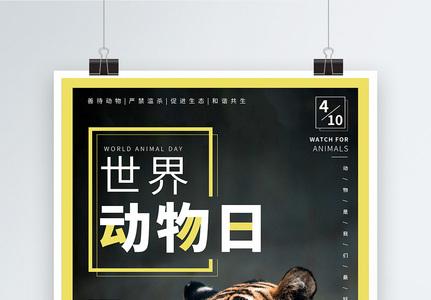 杂志风世界动物日宣传海报设计图片