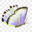 紫色蝴蝶素材图片