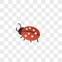 甲壳虫图片