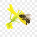 蜜蜂400192406图片