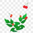 红色果实图片