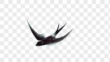 春天的燕子图片