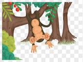 森林里的猴子图片