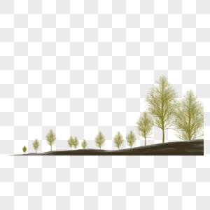 山丘上的树图片