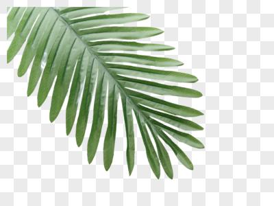 绿色植物叶子元素图片
