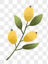 植物果实图片