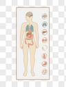 人体解析图图片