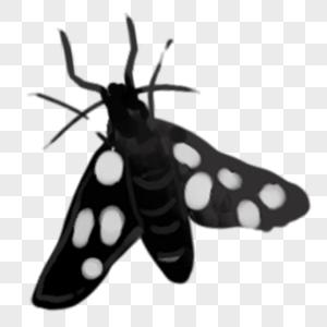 手绘蛾子图片