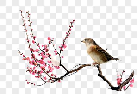 梅花与鸟图片