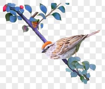 站在树枝上的鸟图片