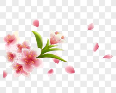 红色的鲜花图片