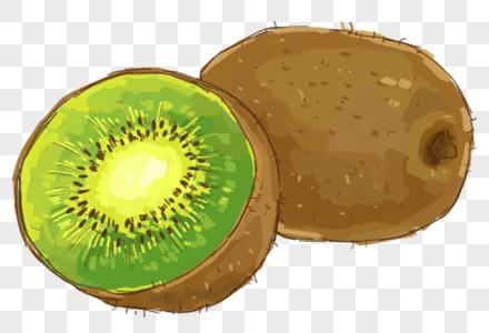 手绘猕猴桃插画