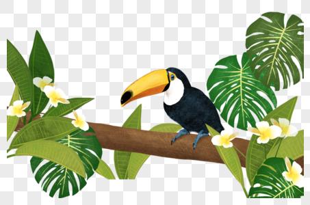 站在树枝上的鹦鹉图片