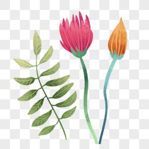 花朵绿叶图片
