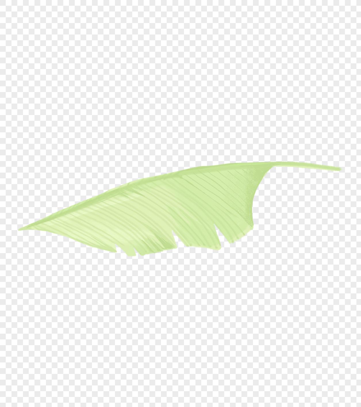 ins风热带植物元素