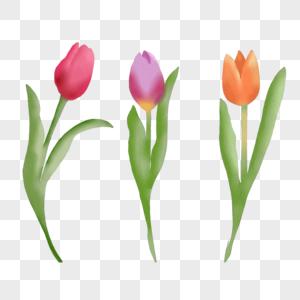 郁金香花朵图片