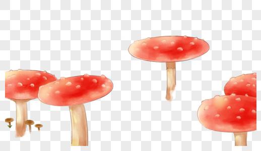 林中蘑菇图片
