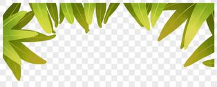 植物草 装饰边框图片