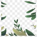 植物边框装饰图片