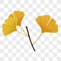 节气银杏叶图片