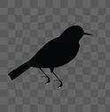 鸟剪影图片