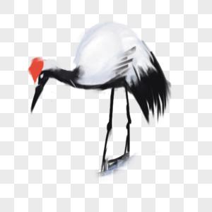 丹顶鹤高清图片