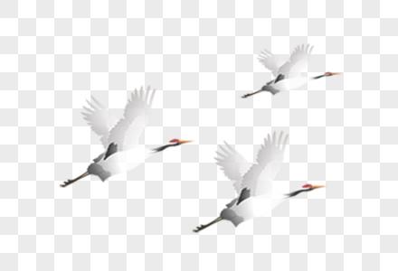 飞翔白鹤图片