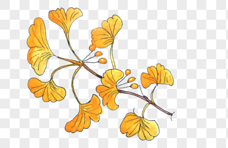 银杏树枝图片