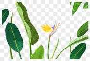 花与叶图片