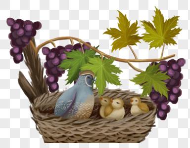 小鸟在葡萄树上图片