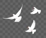 手绘白鸽图片