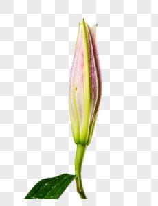 花元素图片