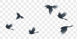 飞鸟剪影图片