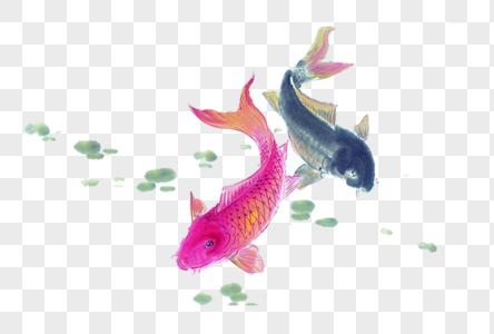 鲤鱼戏水图片