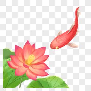 锦鲤荷花图片
