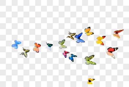 一群飞舞的蝴蝶图片