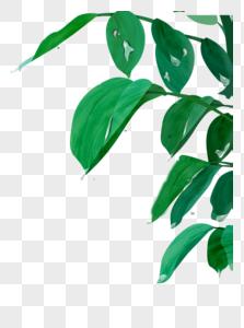 雨水绿叶图片