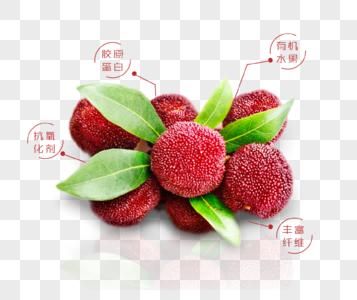 清新美味杨梅促销插画图片