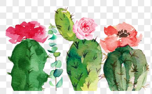 仙人掌花图片