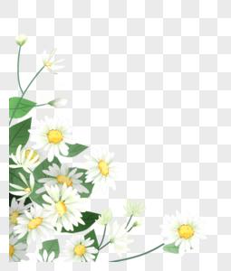 小菊花花丛图片