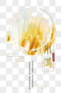 小满二十四节气麦穗图片