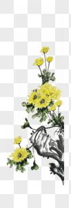 水墨淡雅菊花图片
